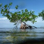 """""""Mangroves in the Belize Atolls"""" Photograph by Melissa Childers"""